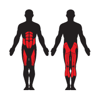 A Balance Board works out your Abdominals, Erector Spinae, Gluteus Maximus, Obliques, and Soleus.