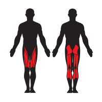 High Jumps help work out your Calves, Gluteus Maximus, Hamstrings, and Quadriceps.