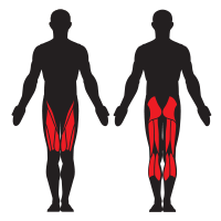 Hurdles help work out your Calves, Gluteus Maximus, Hamstrings, and Quadriceps.